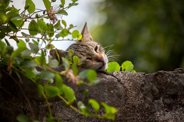 Крупным планом фото милого кота, спящего на высокой каменной стене, заросшей плющом