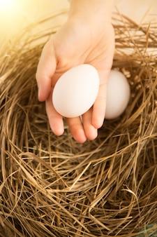 태양에 의해 점화하는 둥지에 대 한 흰 계란을 들고 손의 근접 촬영 사진
