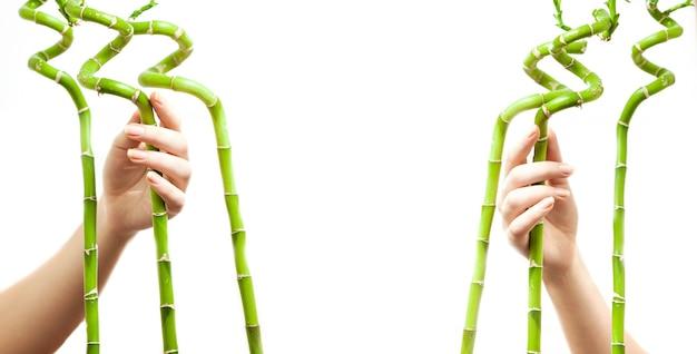 竹を持ち、テキストのフレームを形成する 2 人の女性の手のクローズ アップ写真 Premium写真