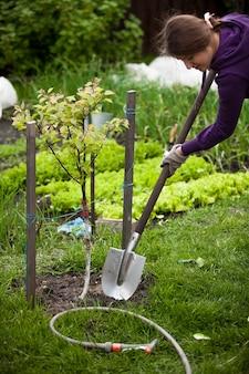 정원에서 사과 나무를 심는 여자의 근접 촬영 사진