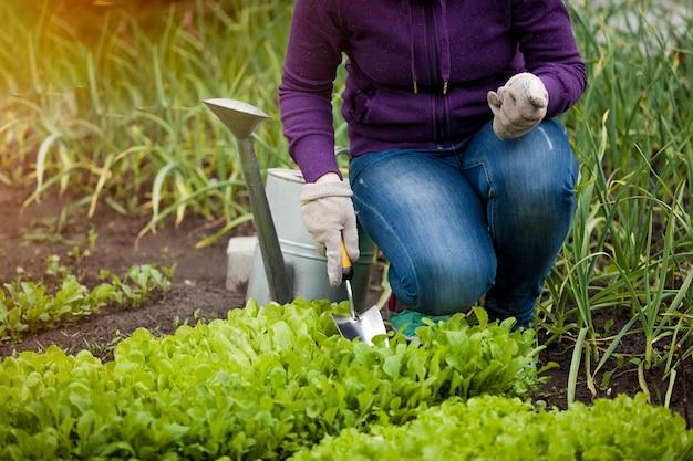 샐러드 침대에 ar 정원을 일하는 여자의 근접 촬영 사진