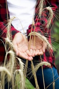 熟した小麦の耳を手に持っている若い女性農家のクローズアップ写真