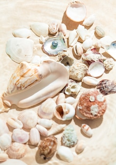 Closeup photo of shells and pearl lying on sand