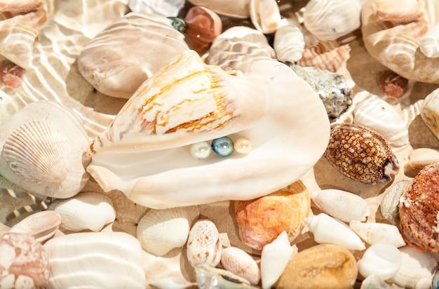 Closeup photo of three pearls in big seashell underwater