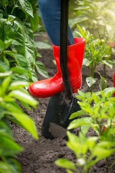 Closeup photo of young woman in red rubber boots digging soil with shovel