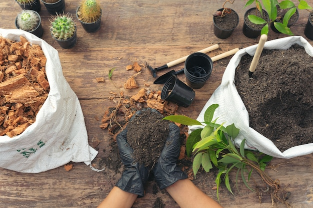 식물 심기 정원사의 손의 근접 촬영 사진