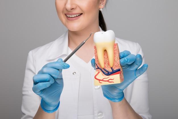 齲蝕とツールで歯を保持している女医のクローズアップ画像。
