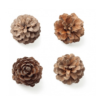 Closeup pine cone set with clipping path