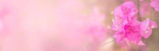 Closeup of pink bougainvillea flower
