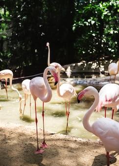 Primo piano dell'uccello del fenicottero rosa allo zoo