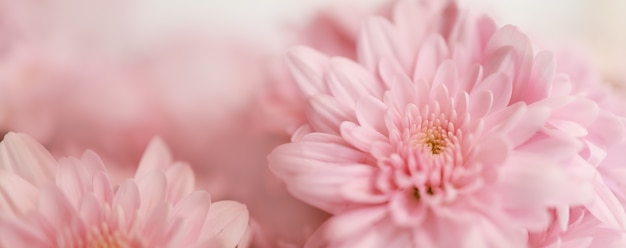 Closeup of pink flower with white background.