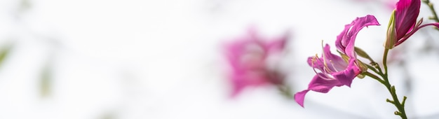 Closeup of pink flower with white sky as background under sunligh