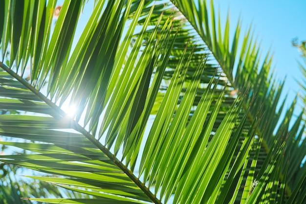 근접 촬영 식물 배경, 질감, 야자수의 녹색 잎.