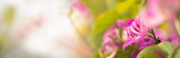 Closeup of pollen of pink flower