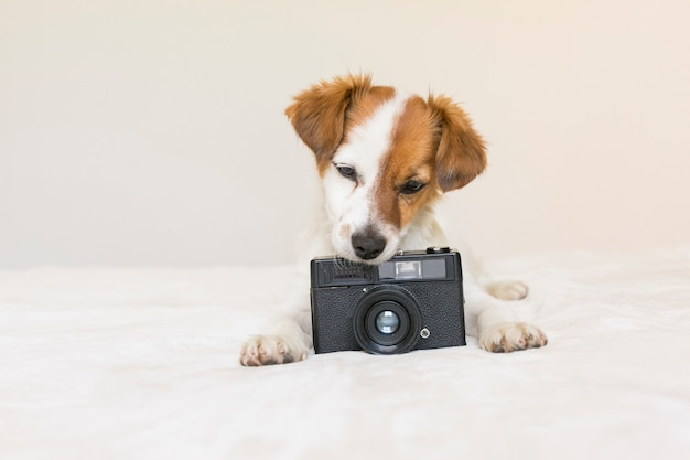 Closeup portrait of a cute small dog sitting on bed and holding a black vintage camera. pets indoors