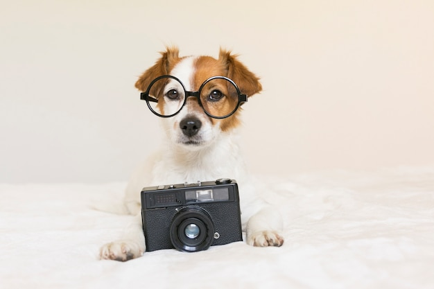 Closeup portrait of a cute small dog sitting on bed with modern glasses and a black vintage camera. pets indoors