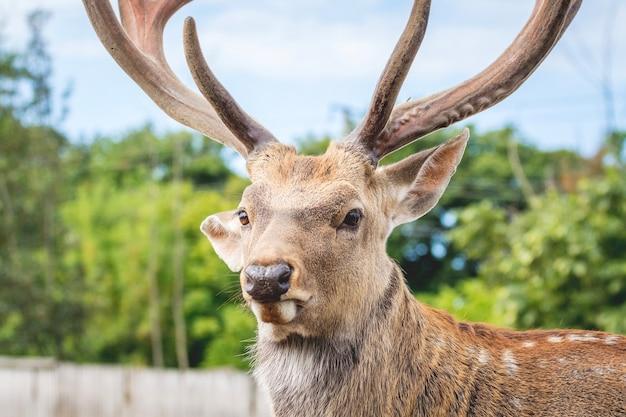 森のぼやけた背景に鹿のクローズアップの肖像画_