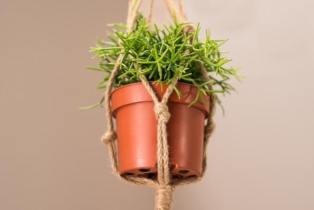 Primo piano di una pianta da interno in vaso che pende dal soffitto con con corda di iuta