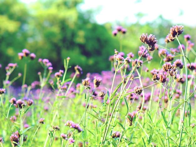 自然な新鮮な花のレトロな暖かいトーンとぼやけた背景のクローズアップ紫の花の庭