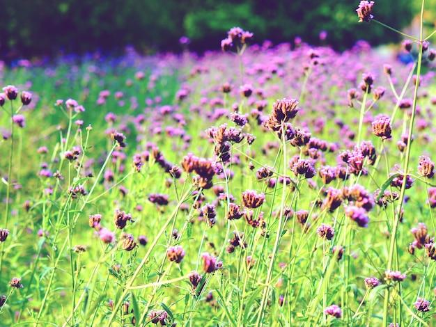クローズアップ紫の花の庭と緑の草美しい花の自然なヴィンテージトーンの植物でカラフル