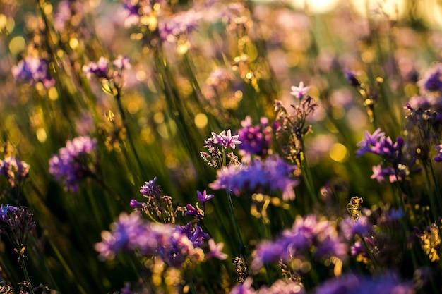 Primo piano dei fiori petaled viola
