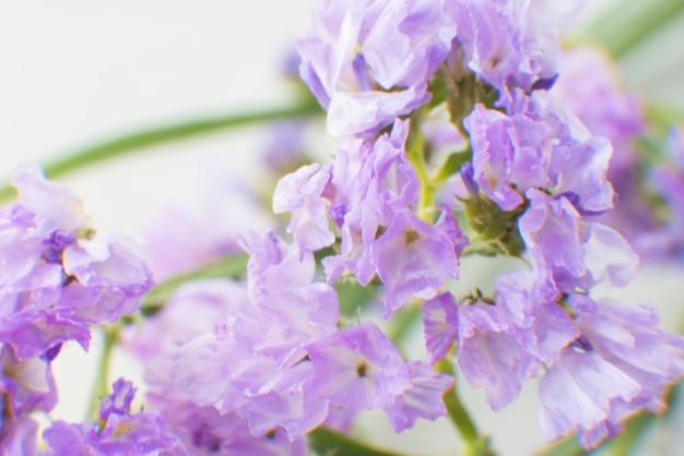 Closeup of purple statice flower