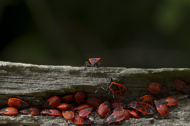 Closeup of red bugs on a tree