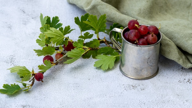 Closeup of a ripe gooseberry plant with a tin mug full of ripe gooseberries on the side