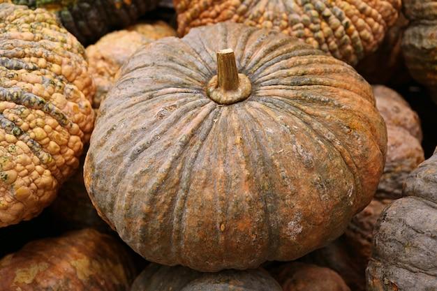 Closeup of a ripe pumpkin on the pile