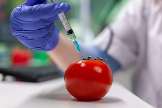 Closeup of scientist biologist hands injecting organic tomato with pesticides using medical syringe during microbiology experiment. biochemist working in farming laboratory analyzing gmo vegetable