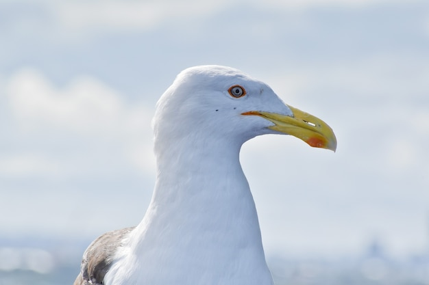 Closeup of a seagull outdoors during daylight
