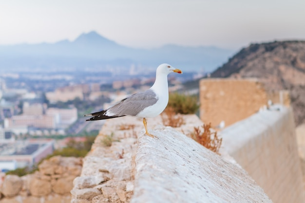 Closeup of a seagull perched on a wall under the sunlight with a town