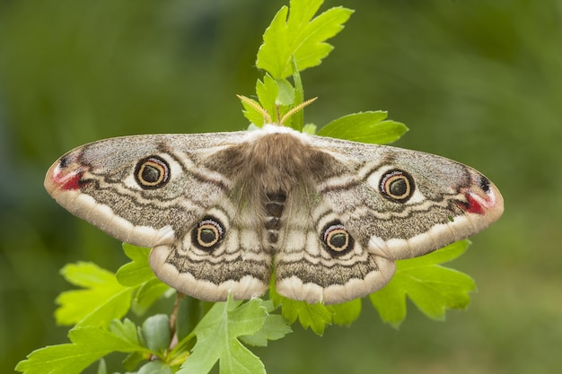 Primo piano fuoco selettivo colpo di una bellissima farfalla seduta su una pianta
