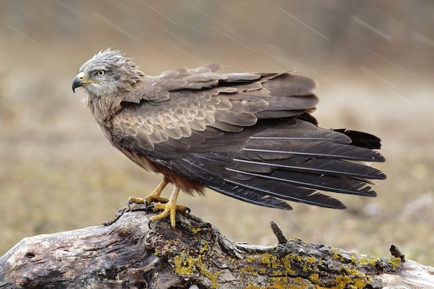 Primo piano fuoco selettivo colpo di un bellissimo falco