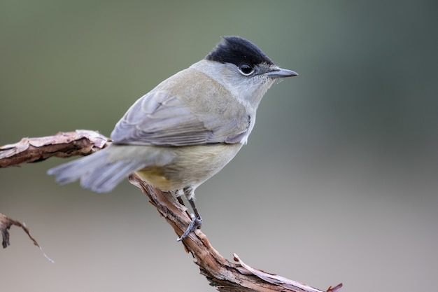 Closeup selective focus shot of a beautiful sparrow