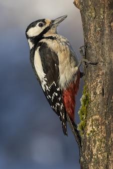 Closeup selective focus shot of a beautiful woodpeckers