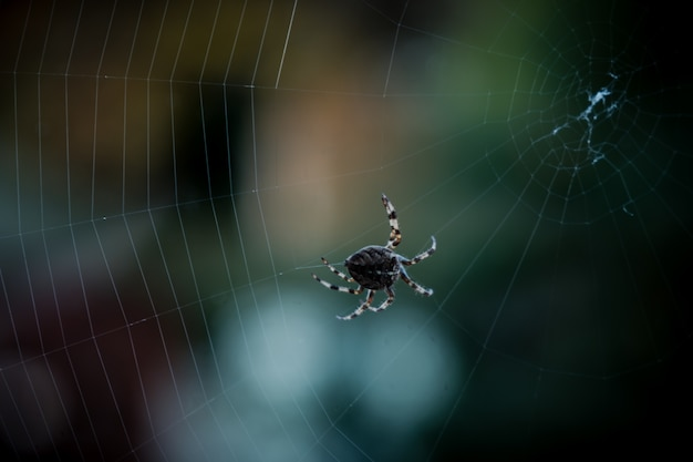 Closeup selective focus shot of a black spider walking on web