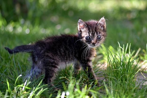 Colpo del fuoco selettivo del primo piano di un gattino sveglio con gli occhi espressivi tristi