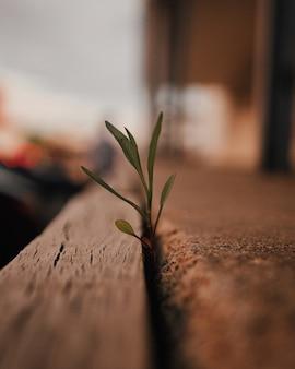 Colpo del fuoco selettivo del primo piano di un germoglio verde della pianta frondosa da una superficie di legno
