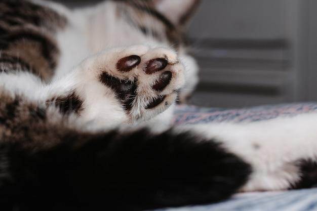 바닥에 누워 있는 귀여운 고양이 발의 근접 촬영 선택적 초점