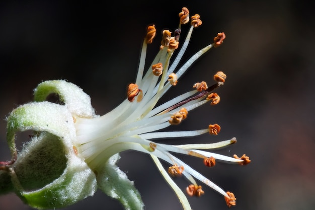 花びらのない花のクローズアップセレクティブフォーカスショット