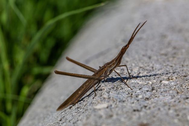 Макрофотография селективный фокус выстрел комара готовится прыгать