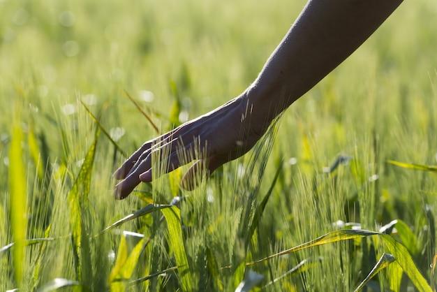 Крупным планом селективный фокус выстрел руки человека, касающегося зеленых растений