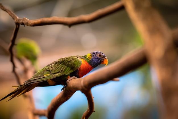 横向きの木の枝に座っている熱帯のオウムのクローズアップの選択的なフォーカスショット