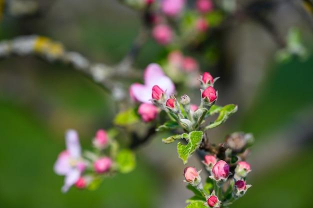 日光の下で素晴らしい花のクローズアップセレクティブフォーカスショット