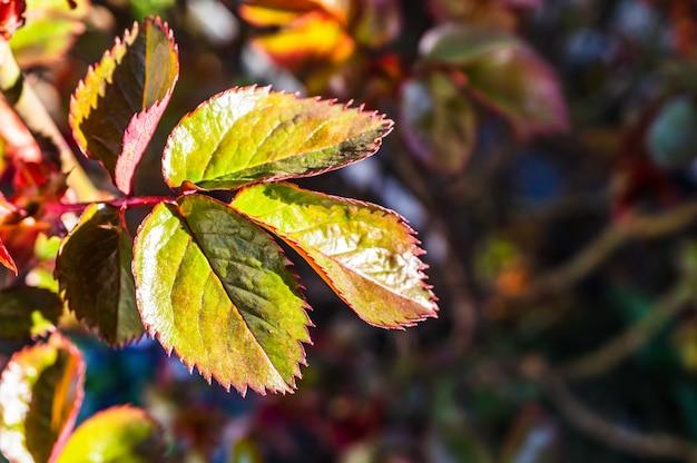 緑と葉と葉のクローズアップセレクティブフォーカスショット