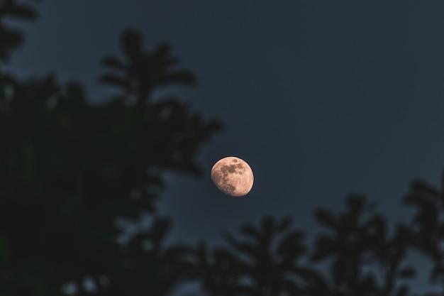 木と月のクローズアップの選択的なフォーカスショット