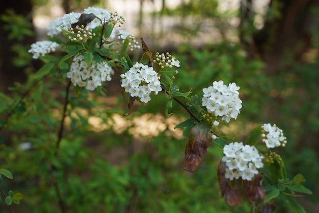 背景に緑と白い花のクローズアップの選択的なフォーカスショット