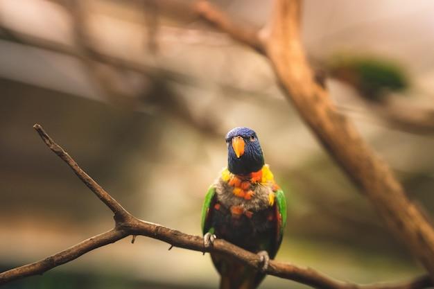 Primo piano del fuoco selettivo colpo di un pappagallo tropicale seduto su un ramo di un albero che guarda lateralmente