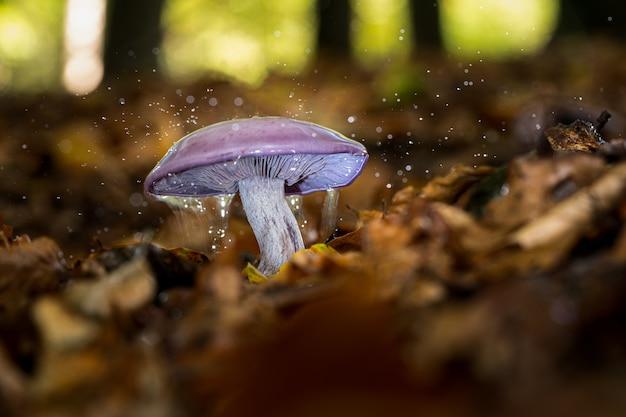 Primo piano fuoco selettivo colpo di un fungo selvatico con gocce d'acqua su di esso che cresce in una foresta